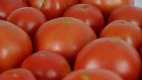 A set of fresh tomato fruit. stock video