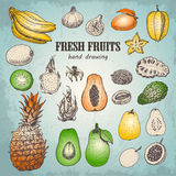 Set of fresh tropical fruits in sketch style Stock Photos