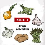Set 3 Fresh vegetables of onions, garlic, squash, peas, potatoes and asparagus. Vector illustration Royalty Free Stock Images