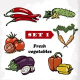 Set 1 Fresh vegetables of tomato, eggplant, pepper, cucumber, carrots and hot peppers. Vector illustration. For your design Stock Image