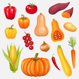 Set of fresh vegetables Royalty Free Stock Image