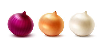 Set of Fresh Whole Yellow Red White Onion Bulbs. Vector Set of Fresh Whole Yellow Red White Onion Bulbs Close up Isolated on White Background Stock Photo