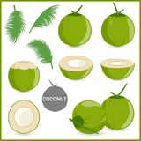 Set of fresh young coconut in vector format. And various style royalty free illustration
