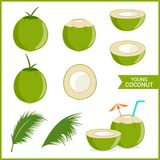Set of fresh young coconut in vector format and various style. Set of fresh young coconut isolated on white in vector format and various style vector illustration