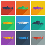 Set of freshwater fish with shadow flat concept Royalty Free Stock Images