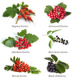 Set From Berries Royalty Free Stock Photography
