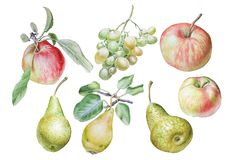Set with fruits. Apple. Pear. Grape. Watercolor illustration. Stock Photography