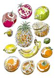 Set of fruits. Freehand drawing. Stock Image