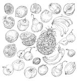 Set of fruits. Freehand drawing. Royalty Free Stock Photography