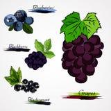 Set of fruits Stock Image