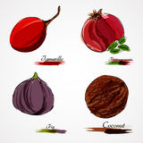 Set of fruits. Set of hand drawn vector ripe whole fruits, fig, tamarillo, pomegranate and coconut on light background Stock Photography
