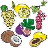 Set of fruits, lemon,grapes,fig, papaya, coconut,  Stock Photo