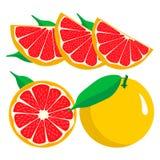Set fruits Orange grapefruit lemon lime. Royalty Free Stock Image