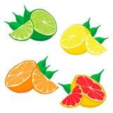 Set fruits Orange grapefruit lemon lime. Stock Photo