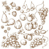 Set of Fruits  Sketch Royalty Free Stock Photo