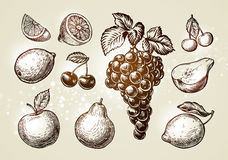 Set fruits sketch. Hand-drawn elements such as grape, lemon, cherry, pear, apple. Vector illustration Stock Photography