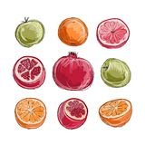 Set of fruits, sketch for your design Stock Images