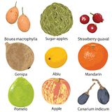 Set of fruits on white background Royalty Free Stock Photography