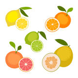Set of fruits. On white background. Lemon, orange, grapefruit, pomelo, lime. Vector illustration Royalty Free Stock Photography