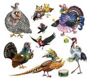 Set of funny birds vector illustration