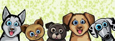 Set of funny cartoon dogs. Husky, shihpoos, dalmatian, pekingese on a green background Stock Photos