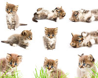 A set of funny cats. On white background Royalty Free Stock Photography