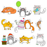 Set of funny cats Royalty Free Stock Photo