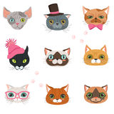 Set of funny cats heads of different breeds, colorful character vector Illustrations Royalty Free Stock Photography