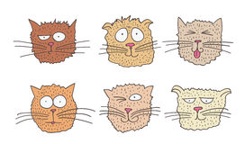 Set of funny cats. Set of six cats of a different nature Stock Photography