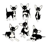 Set of funny dogs. Cute puppy toy terrier  on a white background Royalty Free Stock Image