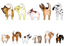 Set of funny dogs showing their butts. Small dogs and Large dogs in two rows vector illustration