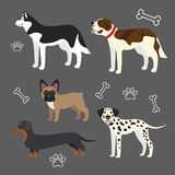 Set of funny dogs Royalty Free Stock Photography