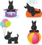 A set of funny dogs.  on white Royalty Free Stock Images