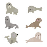 Set funny walruses and sea lions. Set of different walruses and sea lions on white background Royalty Free Illustration