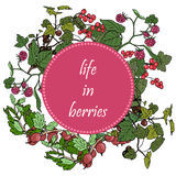 Set of garden berries and green twigs in circle badge, blackberry, raspberry, red currant, gooseberry. Stock Photos