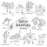 Set of garden berries. Vector illustration for your design Royalty Free Stock Photo