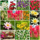 Set of garden and field flowers Royalty Free Stock Photography
