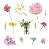 Set of garden flowers, sketch for your design Royalty Free Stock Photos