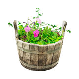 Set garden flowers in wooden bucket Stock Images