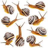 Set of the garden snail Royalty Free Stock Photography