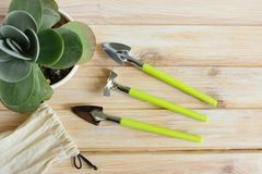 Set of garden tools for planting flowers. royalty free stock image