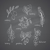 Set of garden and wild chalk hand-drawn berries Stock Photo