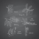 Set of garden and wild chalk hand-drawn berries Royalty Free Stock Images