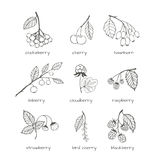 Set of garden and wild hand-drawn sketches berries Stock Photos