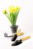 Set gardening tools and potted flowers Stock Photo