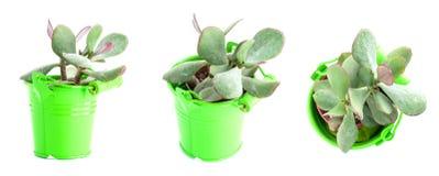 Set garnek rośliny odizolowywać na białym tle Kaktusy i succul zdjęcia royalty free