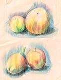 Set Gemüse Pfirsich, gezeichnet mit farbigen Bleistiften Stockbild