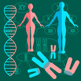 Set genetics people. Set of people with genetics and DNA strands with two kinds of schemes of division of chromosomes. vector illustration Royalty Free Stock Images