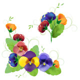 Set of gentle floral. With pansy Stock Photo