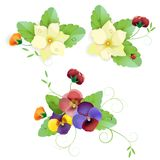 Set of gentle floral. With pansy Stock Photography